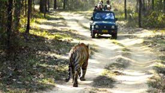 jeep safari in thekkady