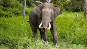 Elephant Arrival Spot Munnar