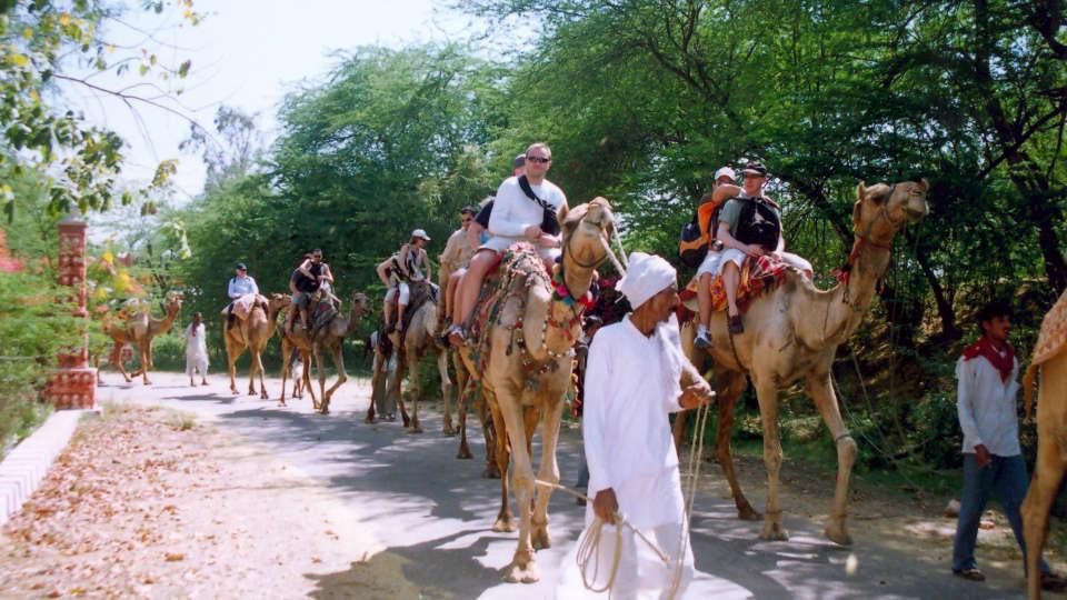 Camel Safari at Umaid Lake Palace Hotel Kalakho Dausa Rajasthan