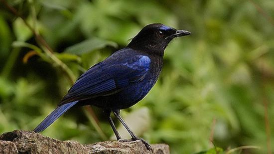 Birds In Coorg, Amanvana Resort Spa, Best resort in Coorg 2