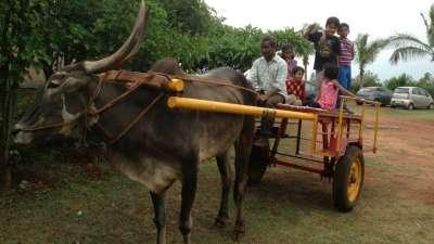 Bullock Cart Driving License at Our Native Village - Resorts near Bangalore Airport 99
