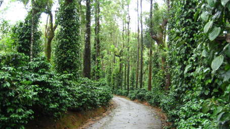 Heritage Resort Coorg Coorg Coffee Trails Indoasia Hotels
