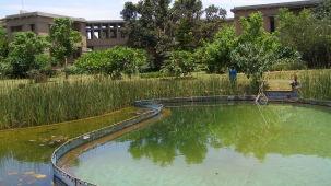Pond at Our Native Village - Resorts around Bangalore 23