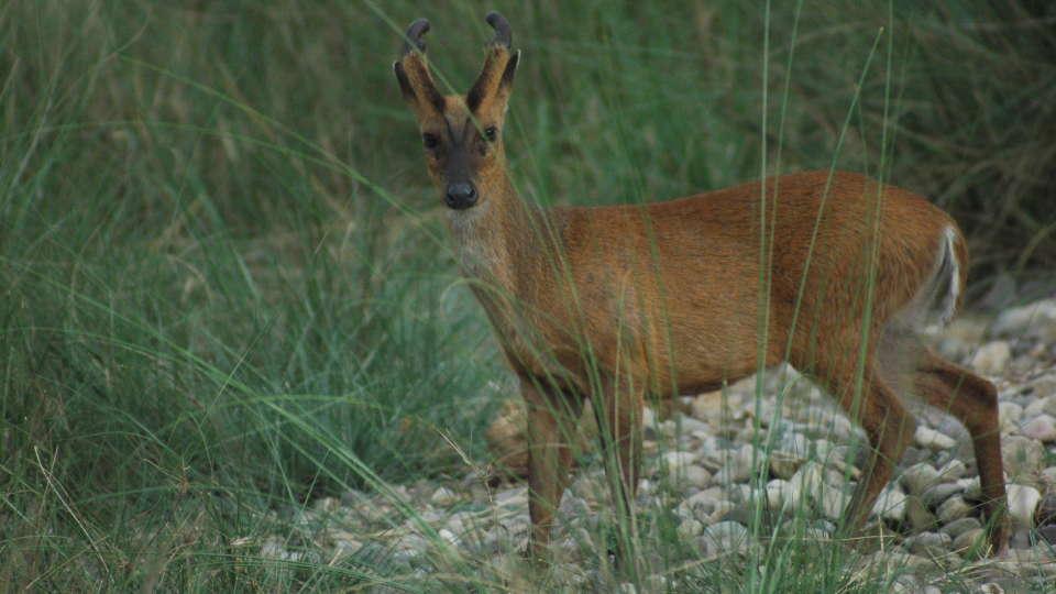 Jungle Safari adventure at Wild Brook Retreat, Rajaji National Park