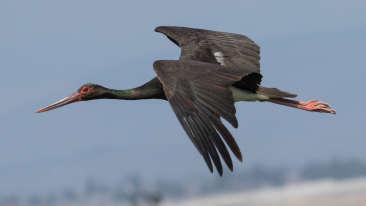 Pawalgarh Conservation Reserve near Corbett Wild Iris Spa Resort