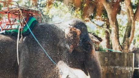 Elephant Safari at Rani Pani Satpura