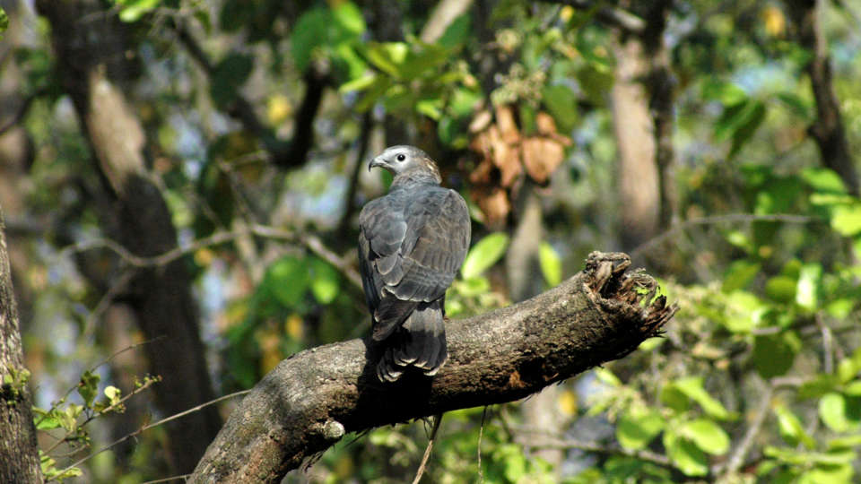 Bird-watching at Wild Brook Retreat, Rajaji National Park