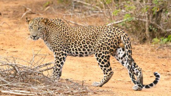 Eravikulam National Park, Things to do in Munnar