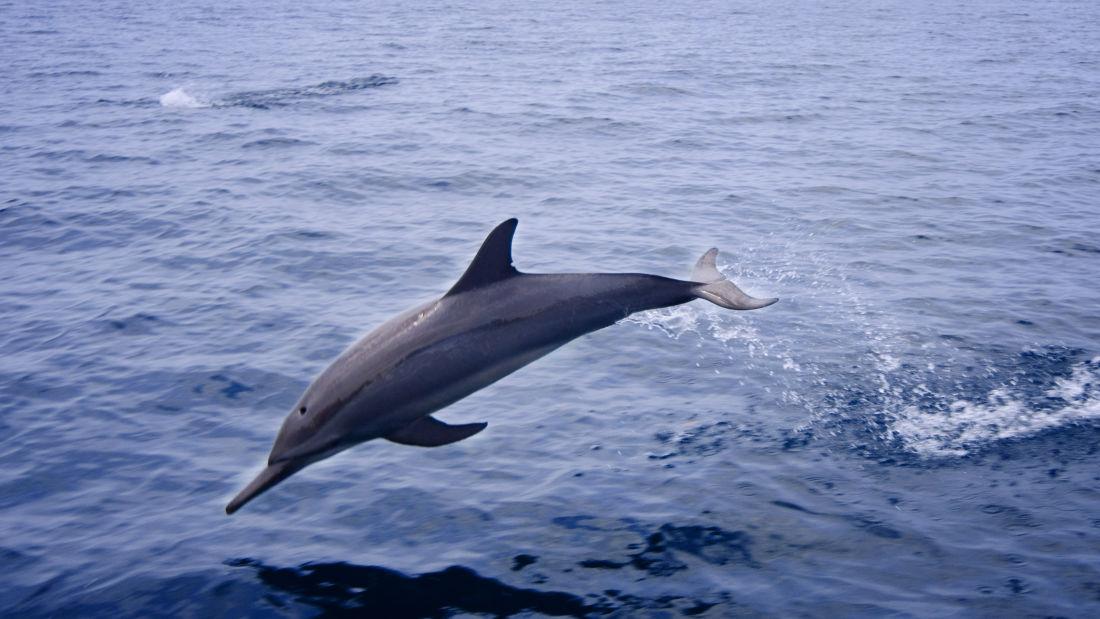 Dolphin Photo by Jillian Frits