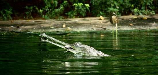 Indira Gandhi Zoological Park Hotel Daspalla Hotel in Visakhapatnam