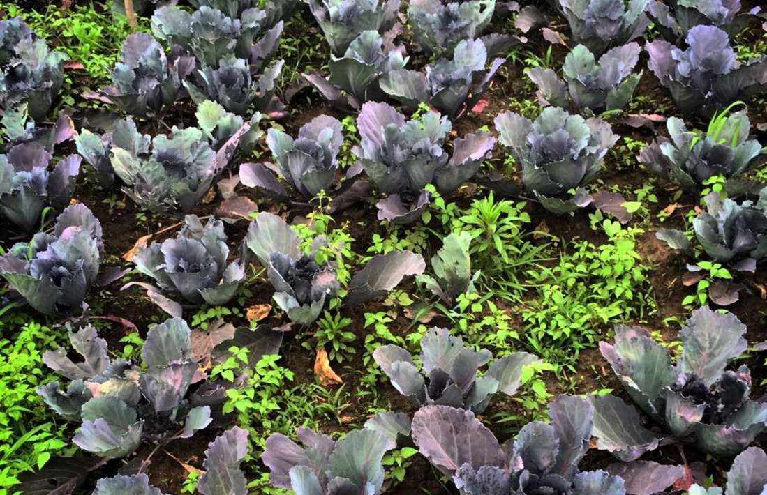 Organic Garden Near Larisa Mountain Resort in Manali - 5 Star Hotels in Manali