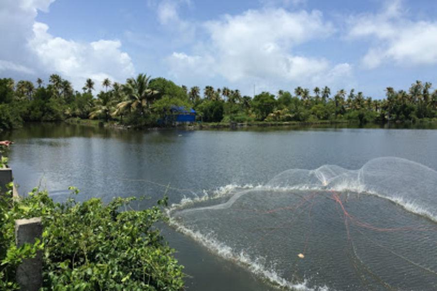 alt-text Cherai Lagoon, Sapphire Club Cherai Beach Villa, Places To See In Cherai