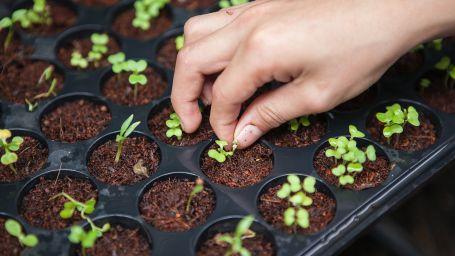 Organic Farming1