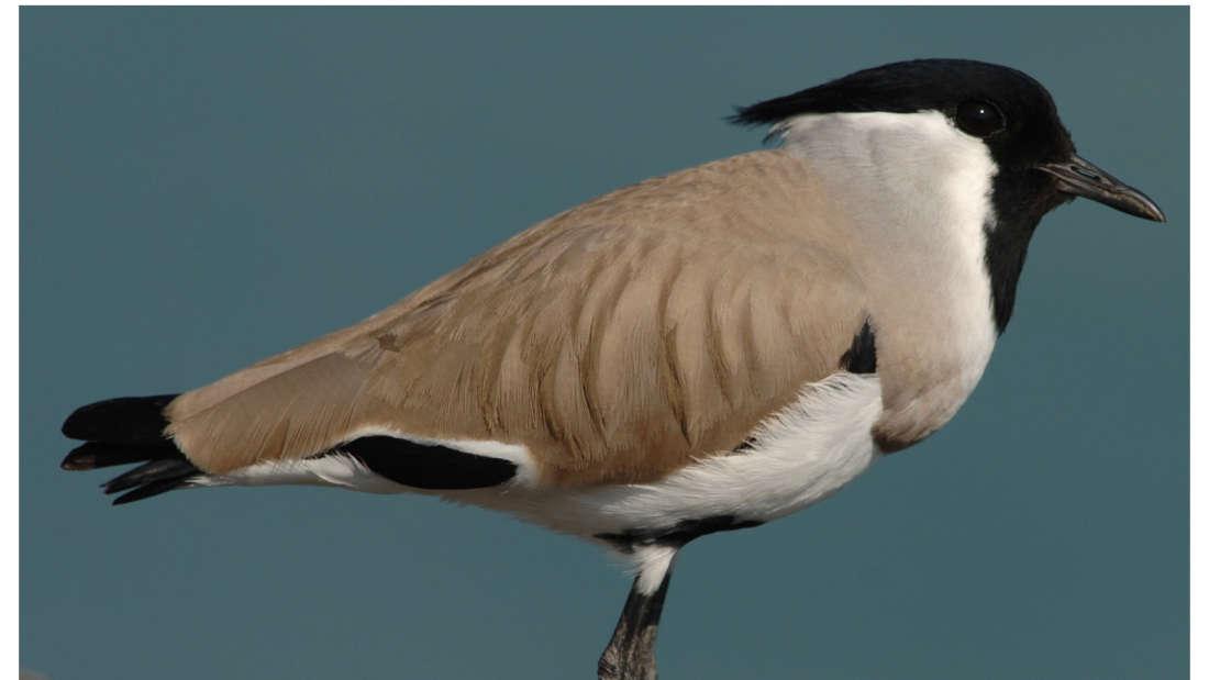 birds Shaheen Bagh Resort Best resorts in dehradun 21
