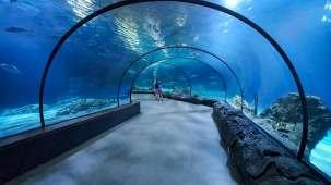 aquarium-tunnel-1567444978ic6