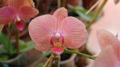 Tranquil Resorts, Wayanad Wayanad pinkorchid
