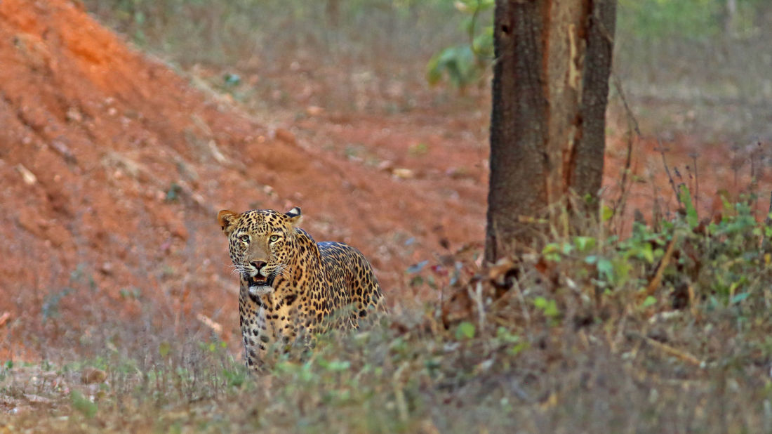 Animal spotting at Satpura National Park 2, Satpura National Park Resorts, Satpura Resort, Jungle resorts in Madhya Pradesh, Forest resorts in Madhya Pradesh,  Wildlife resorts in Madhya Pradesh
