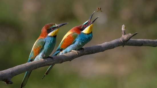 Himalayan Bird Park Marigold Sarovar Portico Shimla, budget hotels in Mashobra