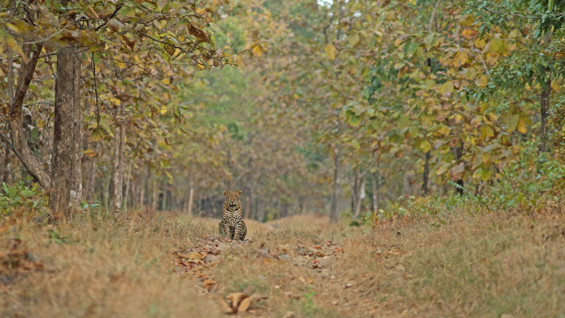 Safari at Satpura National Park, Satpura National Park Resorts, Satpura Resort, Jungle resorts in Madhya Pradesh, Forest resorts in Madhya Pradesh,  Wildlife resorts in Madhya Pradesh