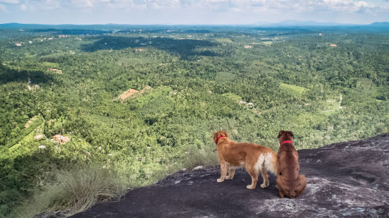 Dogs at Look Out Rock