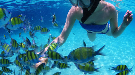 snorkeler-with-fish