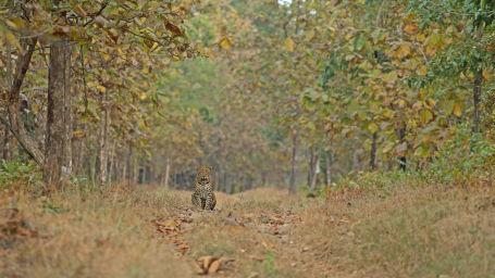Drive through the Satpura National Park, Satpura Resort, Jungle resorts in Madhya Pradesh, Forest resorts in Madhya Pradesh,  Wildlife resorts in Madhya Pradesh