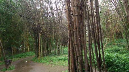 Kadkani Riverside Resort, Coorg Coorg Nisargadhama park 6570
