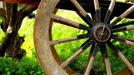 Bullock Cart Ride, Experiences at The Serai Bandipur, Resorts in Bandipur, Weekend Getaways From Bangalore
