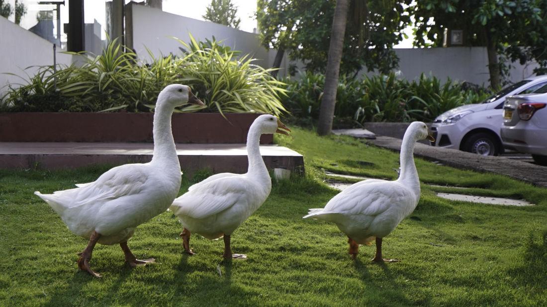 Sai Priya Beach Resort Vizag 3