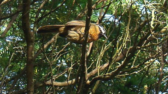 Birds In Coorg, Amanvana Resort Spa, Best resort in Coorg 1