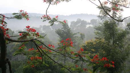 Tranquil Resort, Wayanad Wayanad tree house view tranquil resort kerala