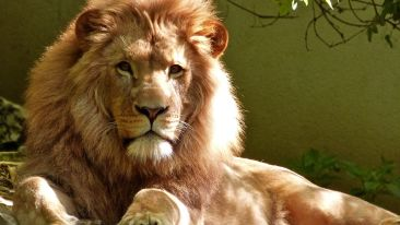 Lucknow Zoo , The Piccadily Lucknow, Places to see in Lucknow