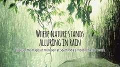 Poetree monsoon image 1111