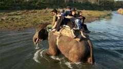 Tiger Camp Resort, Corbett Uttarakhand Elephant Safari Corbett