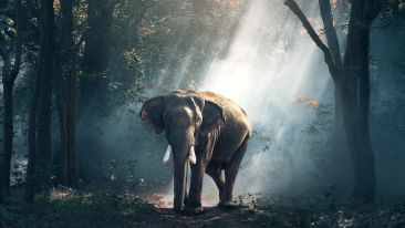 view-of-elephant-in-water-247431