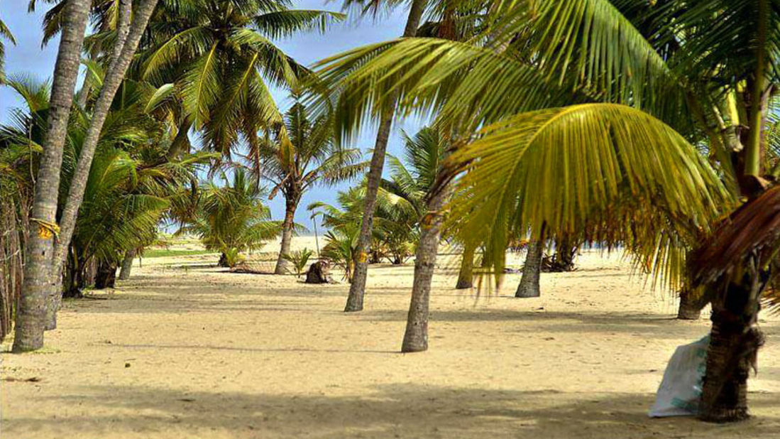abad-turtle-beach-sea-side, Contact Beach Resort in Marari, Beach resorts in Allepey, 4 Star Resorts in Alleppey, Best Beach Resorts in Alleppey, Best Beach Resorts Near Cochin, Beach Resorts in Kerala