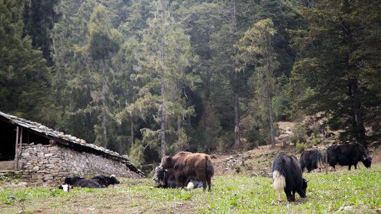tranquil bhutan2 thepematab