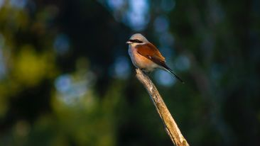 brown-and-white-bird-on-brown-tree-branch-3738619