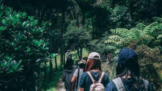 Tiger Camp Resort 2, Tendu Leaf Jungle Resort, Panna Resort
