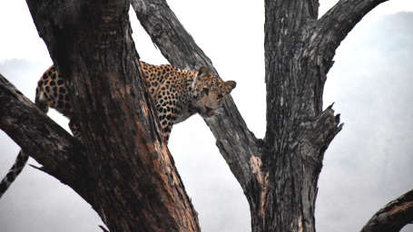 Jhalana Leopard Spotting Safari Package at Clarks Amer, Jaipur