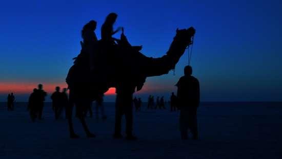 Camel Rides During Runn Utsav near Infinity Resort Kutch