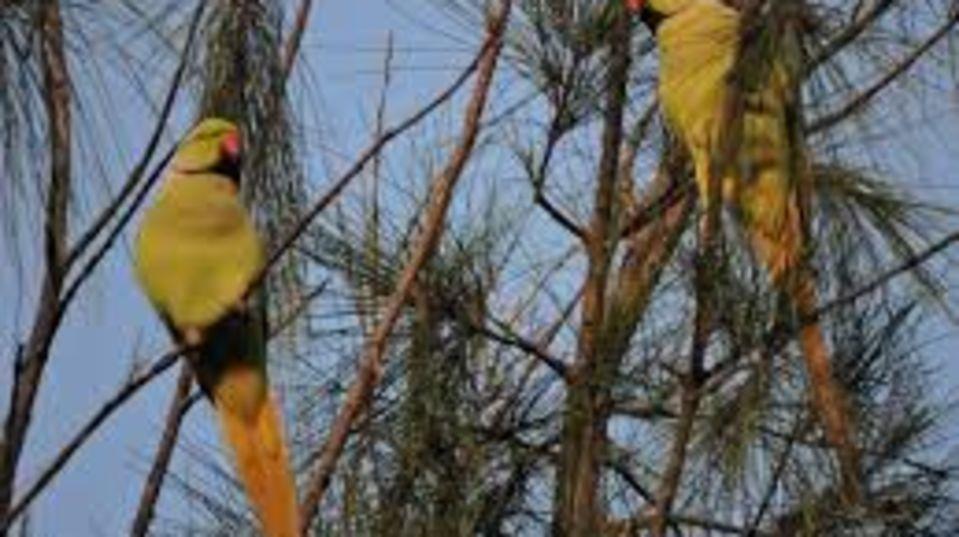 Gopalpur Zoo RS Sarovar Palampur, Hotels in Palampur