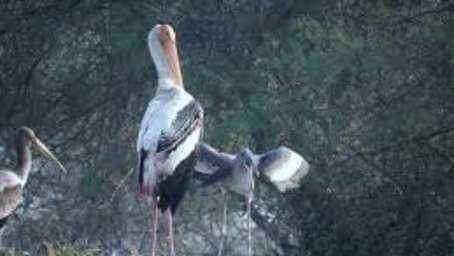 Keoladeo Bird Sanctuary - Umaid Lake Palace Hotel Kalakho Dausa Rajasthan