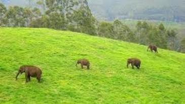 periyar wildlife sanctuary in thekkady
