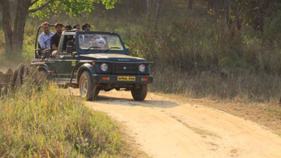 Safari at Kanha near Infinity Resorts