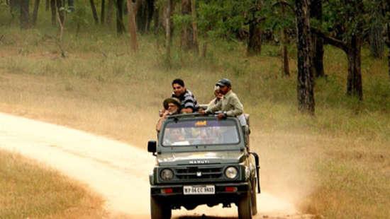 Safari at Kanha near Infinity Resorts 1