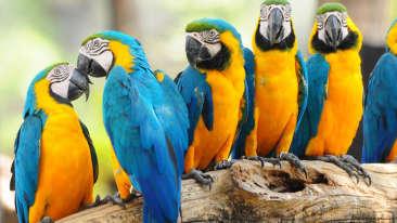 Black Thunder Water Theme Park - Birds