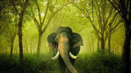 Heritage Resort Coorg Coorg indian elephant