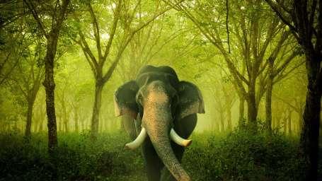 Heritage Resort Coorg Coorg indian elephant