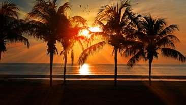 beach-birds-calm-219998